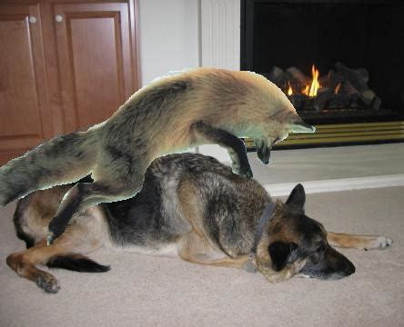 The quick brown fox jumps over the lazy dog - Uncyclopedia